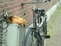 Cat with Bike
