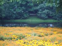 Meadow In The Park_Germany