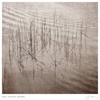 Reeds + Reflection, December