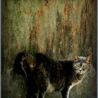 1007551_3232e8c1a80d6fbd6230d6e4e07f628a_lux Art Prints & Posters by Szep Alexandru