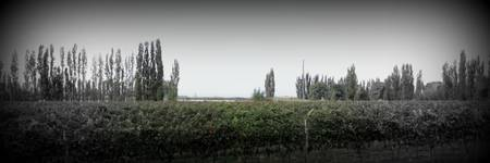 Salentein Vineyard, Mendoza