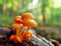 9 orange mushrooms