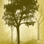 Trees Prints & Posters