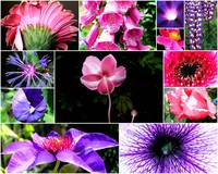 Purples and Pinks- Collage