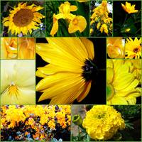 Cool- Yellow and Green Flowers - Collage