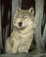 Wolf in the Wood