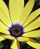 Wildflower, in complementary colors