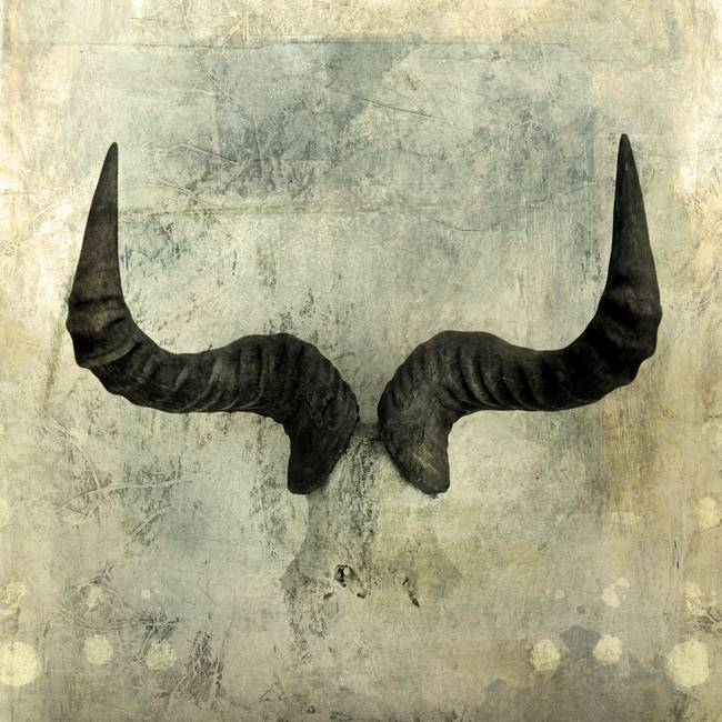 Wildebeest Horns