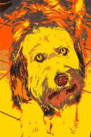 Pop Art Labradoodle