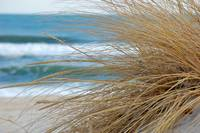 Grass in the Sand Dune