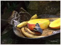 Butterfly Tray 022608-PICT0825