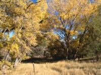 Indian Summer on the High Prairie