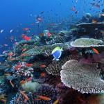 """""""Coral Reef HF070206107"""" by howardwesleyhall"""
