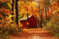 Autumn Forest with Red Barn