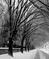 Winter Tree Line Road