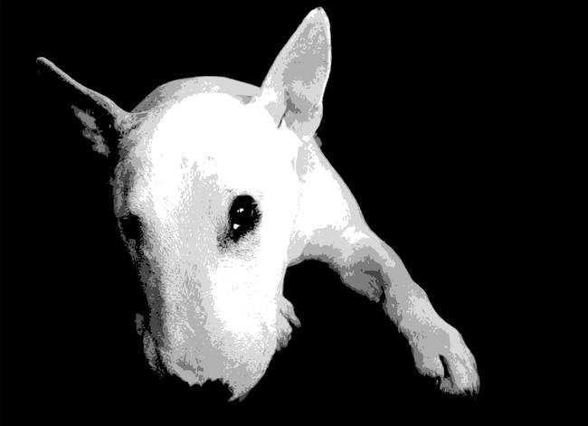 Stunning English Bull Terrier Artwork For Sale On Fine Art Prints - Bull terrier art