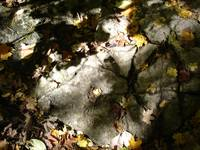 Leaves on a rocky floor