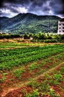 Ningbo: Fields.