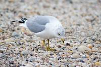 Seagull on the Sand