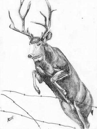 Deer Drawing 1 - Deer leap by Jim Herrin