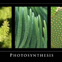 Photosynthesis - Green Tryptych by Eileen Ringwald