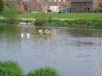 Sculling  On The River Trent  (15795-RDA)