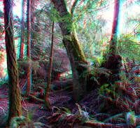 forest 3D