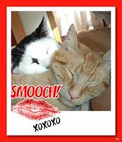 Valentine Kitty Cats Humor