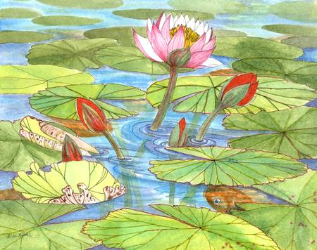 September Waterlily by Diana Delosh