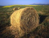 Hay Bale Cylindrical