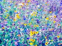 WILDFLOWER FIELD III