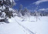 X Country Ski Tracks Big Bear Lake, CA by Tony Kerst