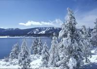 Snowy Trees North Shore by Tony Kerst