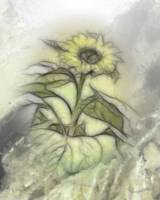 Sunflower by Angel Mist