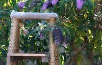 A Ladder in a Lilac Tree