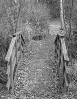 small bridge on the nature trail