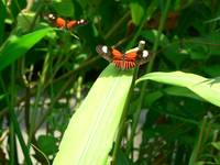 Orange, Black, and White Butterflies