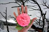 rose hand winter