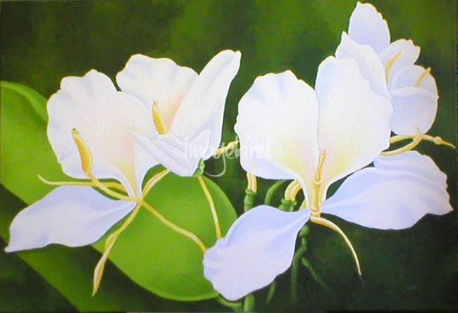 White ginger by mark lee mightylinksfo