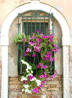 Petunias Through Wrought Iron