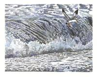 seagull in the spray