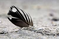Feather in Sand