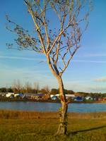 Campground Tree