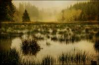 Bog in the Fog