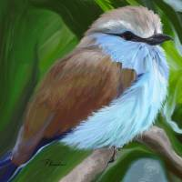 Racket-tailed Roller Art Prints & Posters by Patricia Kemke