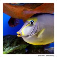 """""""Naso Tang"""" by pieceoflace"""