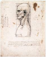 Male Head in Profile with Proportions