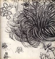 Sketch of a Plant