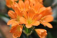 Petite Orange Flowers