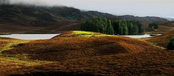 sunlit heather knoll in the Perthshire Hills of Sc